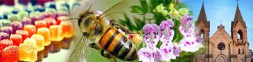 Раков - Ивенец - Мир пчел