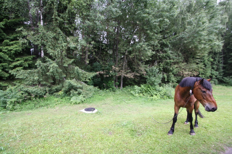 Horseback riding in Belarus