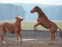 конный спорт в Беларуси