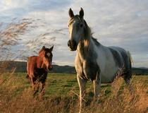 конные туры в Беларуси