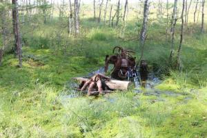 Березинский заповедник - анимация Тайны заповедного болота
