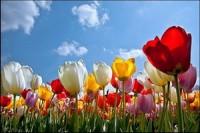 Майские праздники в Беларуси (5 дней)
