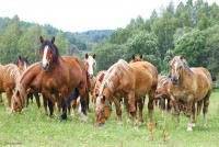 В гости к лошадям