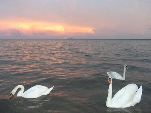 Возера Нарач