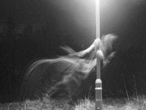 Ghost of Kalvaria