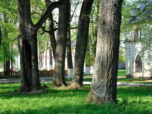 Wonder trees