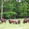 сафари в Беларуси