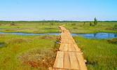 болота в Беларуси